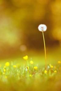 每日一句能量:闻君有二意,故来相决绝。愿得一心人,白首不相离。